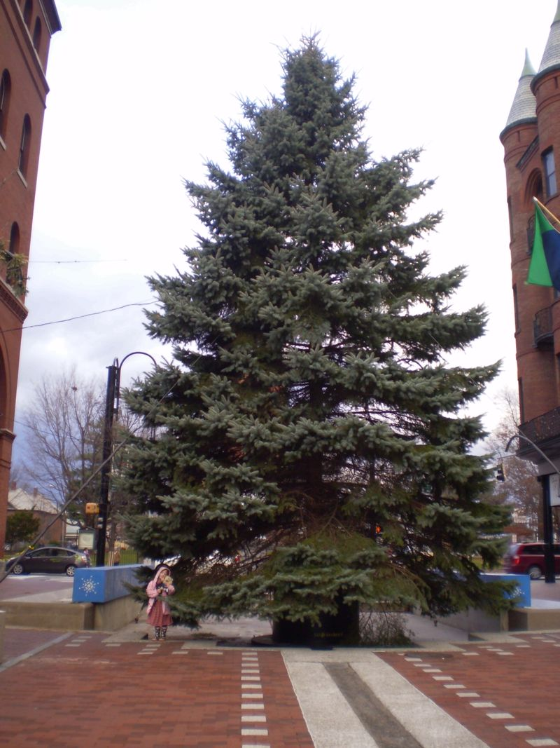 Church St. Tree