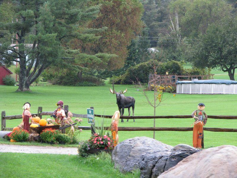 Moose afar